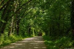 Chemin forestier ... (jymandu) Tags: