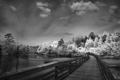 Boardwalk (Howell Weathers) Tags: trees blackandwhite nature water monochrome clouds ir outdoor alabama infrared boardwalk bellingrathgardens fowlriver