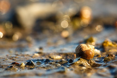 Snail (Morten Falch Sortland) Tags: summer house beach wet water animal norway sand photographer slow no snail countries slug akershus brum sandvika hvik photomortenfalchsortland