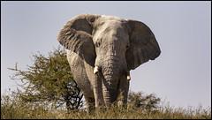 _SG_2016_05_Namibia_0017_IMG_1325 (_SG_) Tags: auto africa park trip elephant tree water car nationalpark wasser solitude desert hole national afrika giraffe ausflug elefant namibia herd baum strauch etosha watering wateringhole elefanten 2016 einde giraffen etoshanationalpark standpost wasserstelle etoshapark elefantenherde giraffenherde giraffesherd