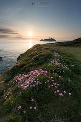 Light up the thrift (T_J_P) Tags: light sunset seascape flower nature golden cornwall cliffs thrift godrevy