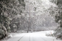 The Icy Road || OBERON || CENTRAL TABLELANDS (rhyspope) Tags: road street new trees winter white snow storm pope cold ice wales forest canon woods south central australia nsw 5d aussie snowfall rhys oberon mkii tablelands jenolan rhyspope