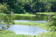 Edward Medard Park (dixiestitch19) Tags: camping florida freshwater campgrounds edwardmedardpark