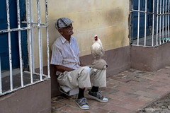 Il gallo e l'uomo - The cock and the man (www.massimonicoli.com) Tags: street man animal photography gallo photo strada foto carretera cuba cock uomo elderly fotografia cuban anciano animale hombre fotografa cubano anziano