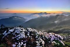 Taiwan Alpine Rhododendron Sunset (Shangfu Dai) Tags:  taiwan     hehuan nikon d800 afs1635mmf4 landscape sunset     sun     alpinerhododendron formosa 3416m 3417m