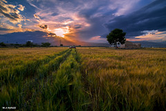 MINI (jopas2800) Tags: sunset espaa tree clouds landscape ruins wheat mini murcia cooper montain tokina1628 nikond610