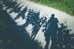 (c) Wolfgang Pfleger-6984 (wolfgangp_vienna) Tags: italien shadow italy green del vineyard strada vine vineyards grn schatten vino sdtirol wein altoadige weinstock eppan weinstrasse weingarten kaltern missian stradadelvino kalterersee weinstrase weinterrasse
