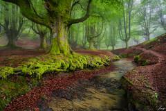looking for my light (Javy Njera) Tags: naturaleza verde primavera luz ro hojas agua paisaje niebla paisvasco hayas hayedo otzarreta