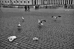 Piazza San Pietro per CleanRome (luporosso) Tags: roma rome italia italy cleanrome sporcizia dirt immondizia garbage incivilt incivility incuria carelessness citteterna eternalcity bn bw bianconero biancoenero blackandwhite sampietrini colonnato gabbiano seagull