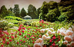 I am a Rose Garden (floralgal) Tags: flowers roses garden pavilion florals nybg newyorkbotanicalgardens bronxnewyork