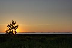 A Sunset Pane (kanyck) Tags: sunset sea tree water nikon calming serene seashore hdr d7200