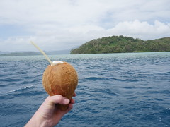 Coconut salud against the coast of Pohnpei.