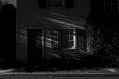365-218 ( estatik ) Tags: county street door light blackandwhite bw sun white house black window night dark blackwhite long exposure shadows darkness belmont pennsylvania sunday ivy monotone pa ave doylestown 365 avenue curb bucks 218 365218 june192016