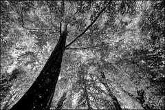 Under the Canopy ... (Colink321 - Slowly returning ...) Tags: monochrome cumbria armathwaite underthecanopy colink321 sonya7rm2 colinkirkwood2016 colinkirkwood2016