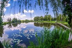 Reflections (meleshko.alex) Tags: europe ukraine water lake river bridge brige reflection travel trees tree trip treas sky clouds landscape panorama fisheye fujifilm fuji xt1 samyang samyang8mm rokinon rokinon8mm 8mm
