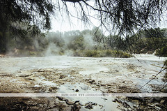 Lake Ngakoro - Wai-O-Tapu - Rotorua (Naomi Rahim (thanks for 2 million hits)) Tags: rotorua newzealand nz 2016 northisland travelphotography travel nikon nikond7000 summer wanderlust geothermal hotsprings hotpools nature landscape waiotapu volcanic thermalwonderland lakengakoro lake trees steam rain