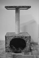 Hidden (analog_m0nkey) Tags: cat paw furry minolta noiretblanc kodak trix srt101 pushprocess foma selfdeveloped filmphotography standdevelopment fomadonr09