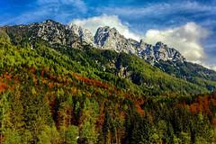 Bergwald (novofotoo) Tags: natur alpen landschaft bergwelt karawanken nationalparktriglav