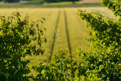 Feld (JBsLightAndShadow) Tags: summer field sunshine nikon sommer feld felder sunny fields heidelberg sonnig sonnenschein nikond3300 d3300