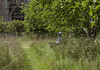 Lacock Bench Monday (vallgall) Tags: meadow lacockabbey 10secondtimer benchmonday