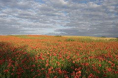 Les deux infinis ** (Titole) Tags: sky field clouds poppies friendlychallenges thechallengefactory titole nicolefaton
