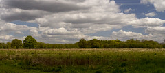 Head for the horizon (Anxious Silence) Tags: field landscape meadow rural ruscombe sky summer treeline twyford