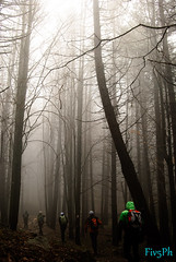 the magic of the fog ... (Fiv5Ph) Tags: voyage wood trees red people italy color tree verde green nature colors fog forest photo woods nikon italia walk foggy viaggi vacanze 2013 d3000