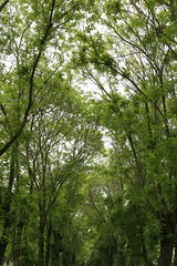 green mile (OnurAcar87) Tags: new city trip travel trees vacation tree green nature topf25 beautiful forest canon turkey landscape spring nice topf50 topf75 day topv1111 joy moment topf100 650d naturefinest