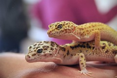 3601 (msc_road) Tags: snake monitor python geckos reptiles beardeddragons
