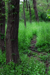 Path in the Woods (JMS2) Tags: park trees green nature canon spring path wildflowers trunks newrochelle inviting wardacres