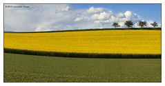 Yellow field (Leonardo Da) Tags: flowers blue panorama tree green field yellow jaune switzerland suisse farm seed rape oil photomerge lacs agriculture champ vaud colza vully vallamand lacdemorat vallamanddessus vullyleslacs