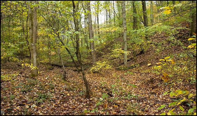 Campbell Preserve - October 2007