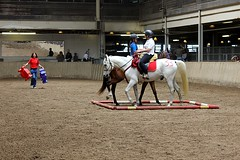 Arabian horse 1 (giltay) Tags: horses horse cne arena arabian arabianhorse canadiannationalexhibition arabianhorses horsepalace torontohorseday ontariohorseday