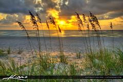 Seaoats-at-Sunrise-Palm-Beach-County-Florida (Captain Kimo) Tags: ocean beach sunrise sand singerisland seaoats palmbeachcounty photomatixpro hdrphotography highdyanmicrange mygearandme captainkimo