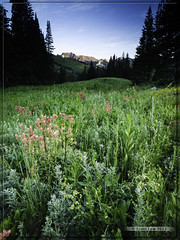 Albion Basin at Sunrise (Just Used Pixels) Tags: flowers summer mountain mountains sunrise utah basin alta wildflowers albion snowbird