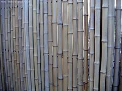 bamboe tuinhek / bamboo garden fence (dietmut) Tags: fence nederland thenetherlands bamboo sonycybershot zuidholland bamboe hoogvliet tuinhek 2013 zalmplaat sonydsct200 augustusaugust dietmut yourfavorites77