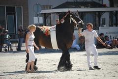 trekpaardkeuring ijzendijke 21072013 3713 (jo_koneko_san) Tags: horses horse holland netherlands cheval nederland zeeland chevaux paard hollande zeeuwsvlaanderen 2013 ijzendijke parden trekpaard zeeuwstrekpaard trekparden
