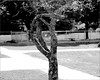 Bent Tree (joeldinda) Tags: park bw tree cherry downtown raw michigan mulliken d300 joeldinda