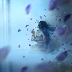 Winter is Coming (Frameless Formations) Tags: blue winter selfportrait snow cold flower fairytale flying petals movement wind creative inspired surreal story jar imagination chill whimsical blackrose bluerose glassbottle changingweather