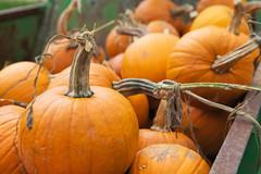Wagon of Pumpkins (giantmike) Tags: autumn fall wagon farm pumpkins pile canonef24105mmf4lis