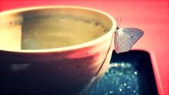 (akurashashin) Tags: butterfly japanese tea teabowl