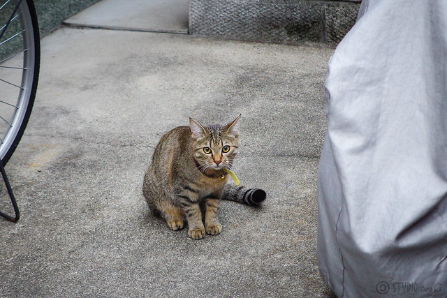 Today's Cat@2013-10-19