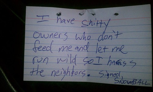 I have shitty owners who don't feed me and let me run wild so I harass the neighbors. Signed, Snowball