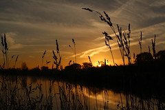 Reeds (music_man800) Tags: park uk morning november winter orange plants lake cold reflection water silhouette plane sunrise canon reflections reeds cherry dawn mirror early twilight glow aircraft united country kingdom orchard calm crisp contrails bushes essex southend 700d