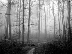 (ela_s) Tags: las november autumn fog forest listopad jesie mga canons90