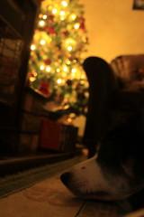 Relaxation (Rachael Webster UK) Tags: santa christmas xmas tree canon decoration christmastree fatherchristmas canon650d