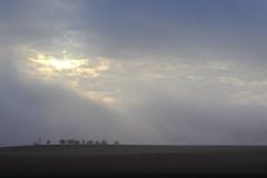 Sous un rayon de soleil (StephanExposE) Tags: rayon soleil arbre tree sun champs field sunlight brume brouillard fog marestsurmatz oise france canon 600d 1855mm stephanexpose