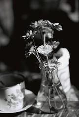 Cng Coffe (MrQ1984) Tags: flower film 35mm fuji fujifilm analogue om zuiko om1 fujineopanacros100 zuiko85mmf2 zuikonmc85mmf2