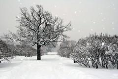 2010 Russia Travel St-Petersburg Winter - 0003 (jenya_n) Tags: travel winter white snow cold tree ice squall stpetersburg frost russia snowstorm gale wintertime blizzard blast snowflurry russianwinter precipitation harshwinter