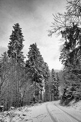 Snowy pines (Nekr0n) Tags: road schnee trees winter sky blackandwhite bw snow slr classic monochrome digital zeiss forest canon germany t landscape deutschland eos blackwhite 28mm himmel contax trail pines carl 5d canon5d 28 fullframe dslr freiburg schwarzweiss baden wald schwarzwald blackforest yashica manualfocus ff baum f28 cy umwelt distagon primelens carlzeissdistagont28mmf28 imbreisgau